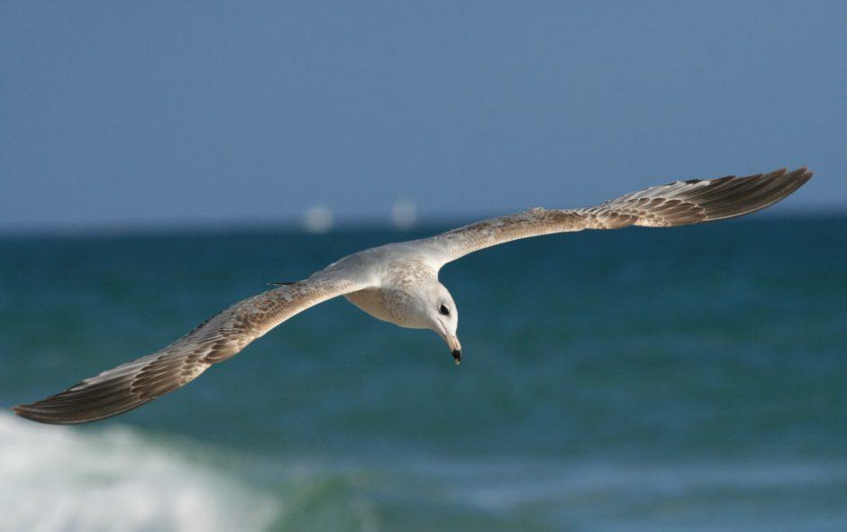 Gull – Original Short Story